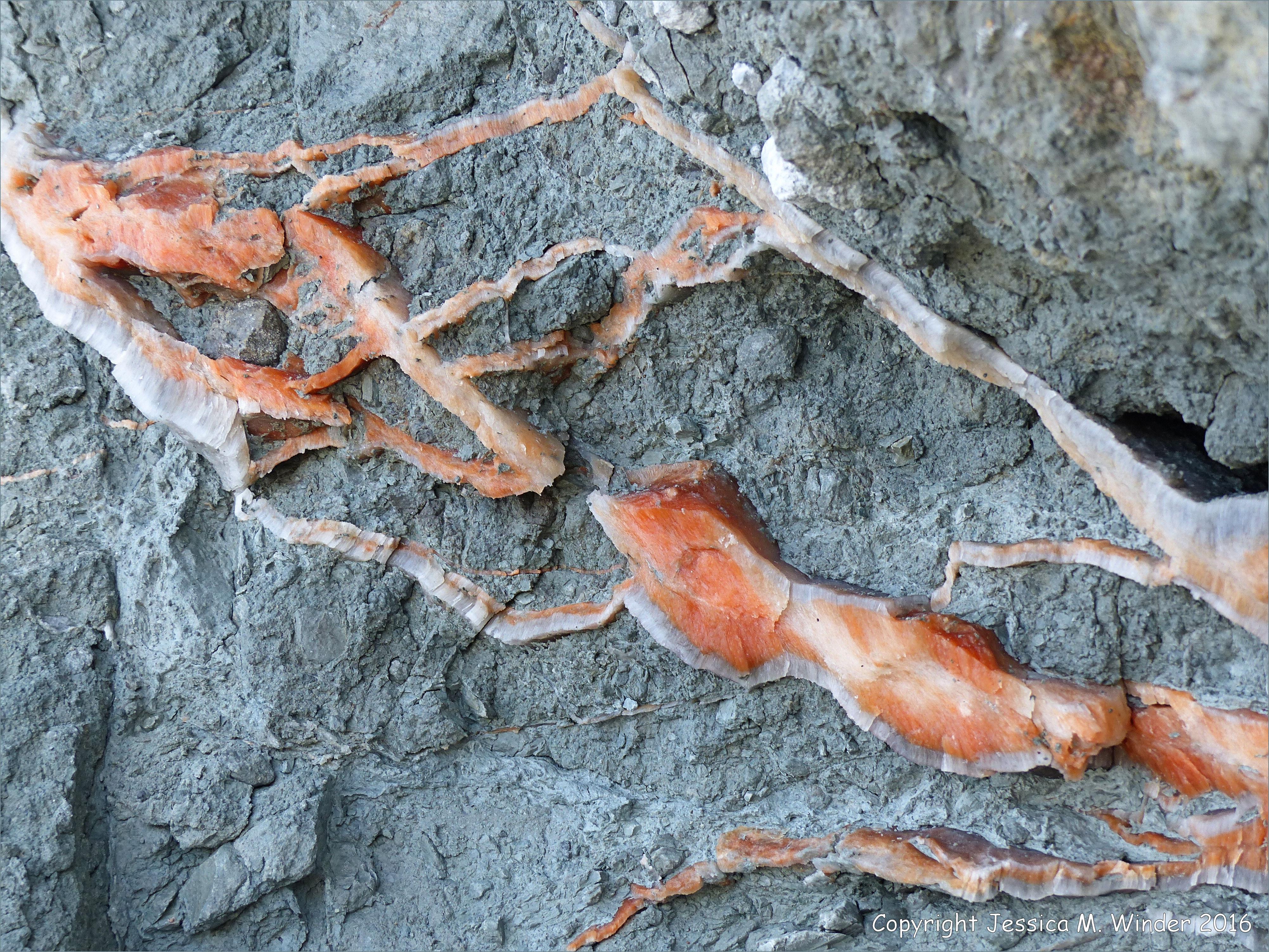 Gypsum Satin Spar ~ Satin spar gypsum at clarke head jessica s nature