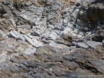 Water-worn limestone at Worms Head causeway