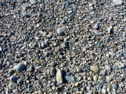 Pebbles on the beach at Rocquaine Bay