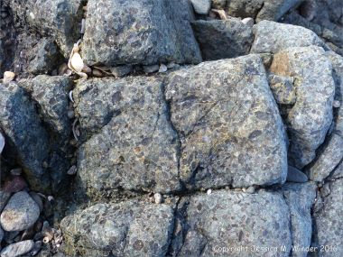 Detail of a vogesite dyke at L'Eree in the Channel Island of Guernsey