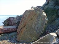 Boulder on the beach from the fault zone at Clarke Head, Nova Scotia, Canada.