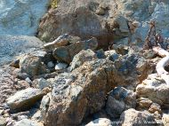 Boulders on the beach from the fault zone at Clarke Head, Nova Scotia, Canada.