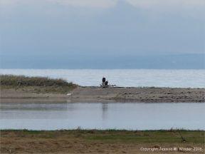 Coastal view of flat tidal water and salt marsh