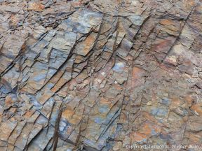 Silurian rocks from Arisaig, Nova Scotia, Canada.