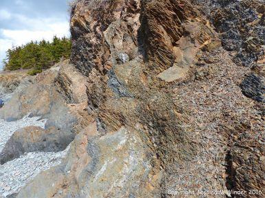 Silurian rocks from Arisaig, Nova Scotia, Canada.