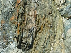 Vertical strata in phyllite rock in Cape Breton