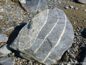 Boulder of St Peter Port Gabbro with veins at Spur Bay on the Channel Island of Guernsey