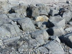 Outcrops of St Peter Port Gabbro on the shore at Spur Bay in the Channel Island of Guernsey, showing crystals aligned into bands.