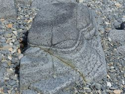 Outcrop of St Peter Port Gabbro on the shore at Spur Bay in the Channel Island of Guernsey, showing crystals aligned into bands.