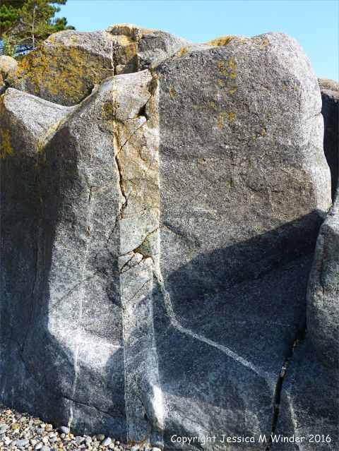 Outcrop of St Peter Port Gabbro with veins at Spur Bay on the Channel Island of Guernsey