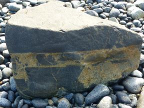 Boulder of St Peter Port Gabbro with veins containing rock fragments at Spur Bay in the Channel Island of Guernsey
