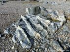 Outcrop of St Peter Port Gabbro with veins at Spur Bay in the Channel Island of Guernsey