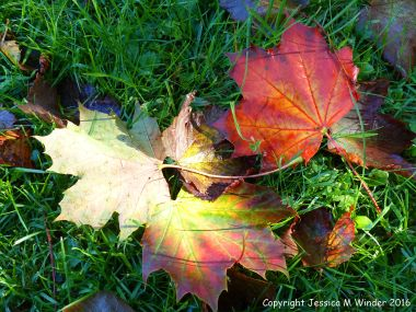 Fallen autumn leaves in the British countryside