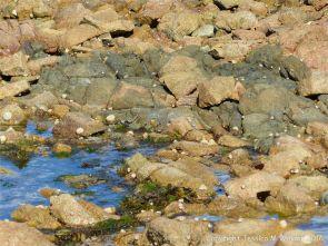 Granite-Diorite Marginal Facies at Cobo Bay