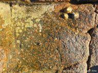 Rock close-up of Granite-Diorite Marginal Facies at Cobo Bay