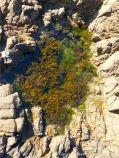Rock pool with seaweed in Cobo Granite