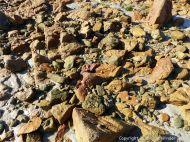 Granite-Diorite Marginal Facies at Cobo Bay in Guernsey, C. I.