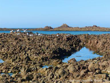 Low tide rocks at Cobo Bay