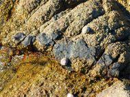Black vein running through granite at Cobo Bay