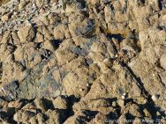 Rock texture at Cobo Bay
