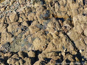Rock texture at Cobo Bay