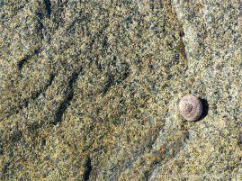 Rock close-up of Bordeaux Diorite complex (?) at Cobo Bay