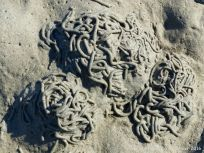 Lug worm casts at Cobo Bay