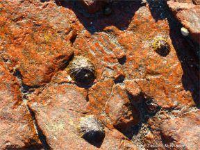 Cobo Granite at Cobo Bay, Guernsey, C.I.