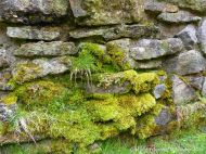 Moss-covered ancient stones in the boundary wall for the Lone Shieling