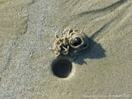 Lug worm casts and blow holes on a sandy beach