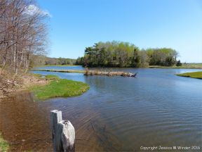 Looking north over Ogden's Pond from the bridge at Crystal Cliffs Beach