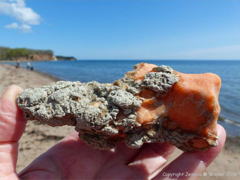 Beach stone with range tinted gypsum crystal in limestone at Crystal Cliffs Beach