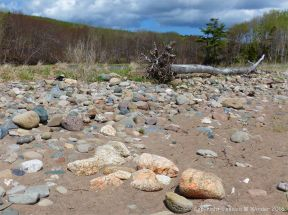 Beach stones and driftwood at Crystal Cliffs Beach