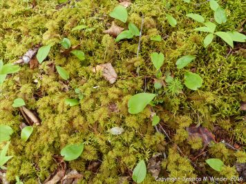 Mosses in St Ann's Provincial Park - Ferns in St Ann's Provincial Park