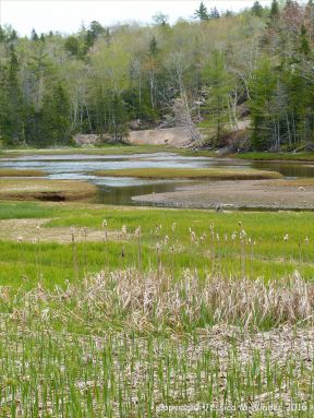 View across North Cut at St Ann's Provincial Park