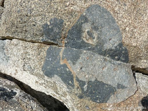 Rock texture and natural pattern in Herm Granodiorite