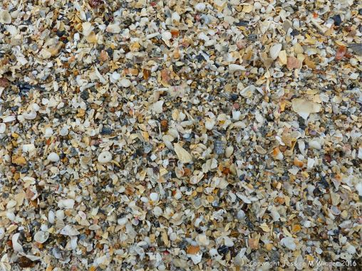 Close-up of coarse shell sand at Belvoir Bay on the Channel Island of Herm