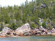 Grantic cliffs at the north end of Black Brook Cove