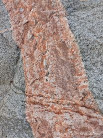 Pegmatite vein or dyke in biotite granite at Black Brook Cove