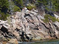 Granite cliff face at Black Brook Cove
