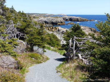 View looking north along the trail near Morning Star Cove