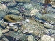 Clear water splashing over beach stones at Morning Star Cove