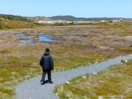 Boggy wetland area along the Louisbourg Lighthouse Trail
