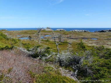 Boggy area viewed from the Louisbourg Lighthouse Trail near Morning Star Cove