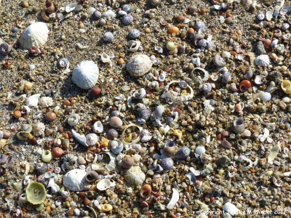 Sea shells on a sandy beach