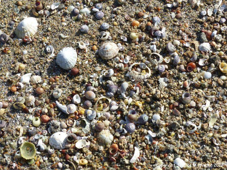 Sea shells on a sandy beach