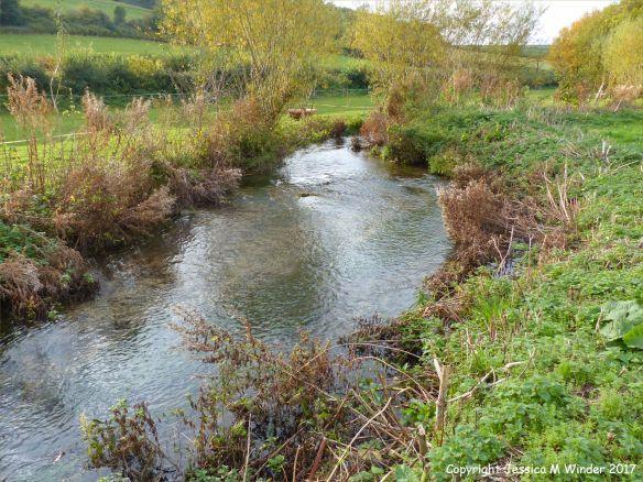 Small chalk stream in rural Dorset