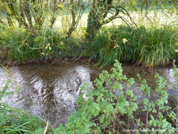 Chalk stream in the English countryside