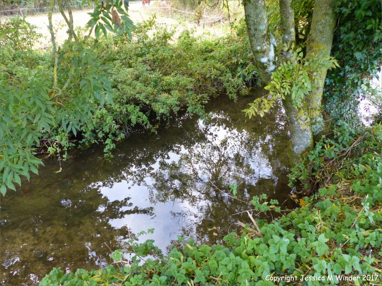 Small Dorset chalk stream in autumn