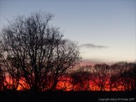 Red sky at sunrise with silhouetted winter trees